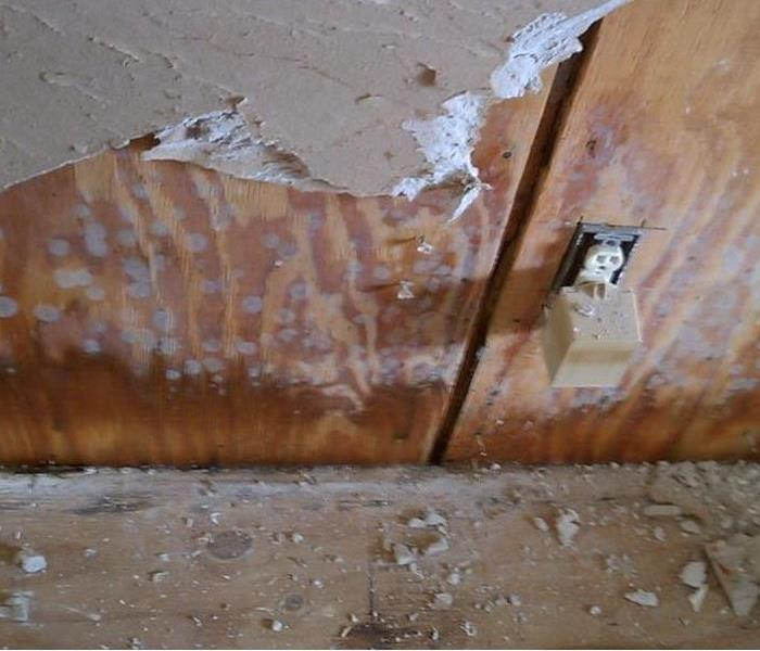 Residential Mold Growth